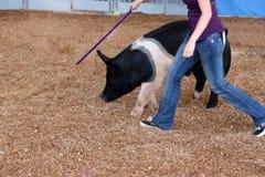 djur utbildning Fotografering för Bildbyråer