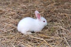 Djur - vit liten kanin på sugrörgolv Arkivfoton