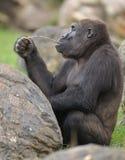 djur zoo Fotografering för Bildbyråer