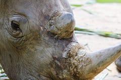 Djur zoo, Vietnam royaltyfri foto