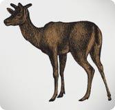 Djura fläckiga hjortar med horn, hand-teckning Arkivbild
