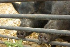 djura industrier Royaltyfri Fotografi