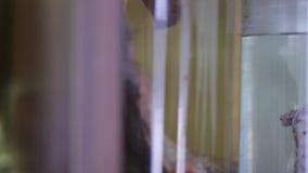 Djura organ i en flaska med formaldehyde på laboratoriumhyllan som används för utbildning Kameraflyttningarna från från vänster t lager videofilmer