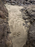 djura sandspår Fotografering för Bildbyråer