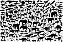 djura silhouettes Arkivfoto