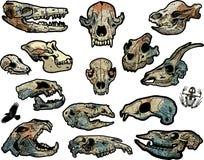 djura skallar stock illustrationer