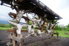 Djura skallar i balurannationalpark Royaltyfri Fotografi