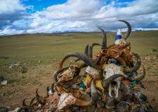 Djura skallar på sjön Manansovar Fotografering för Bildbyråer