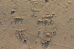 Djura spår från hamnskyddsremsan, Phocavitulina, på stranden på Grenen, Danmark royaltyfria foton