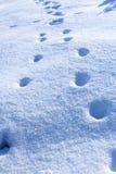 Djura spår i nytt lossar snö Arkivfoton
