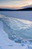 Djura spår i vintersnön Arkivfoton