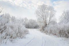 Djura spår i vintersnön Royaltyfri Foto