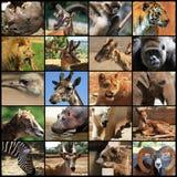 djurcollage Royaltyfria Foton