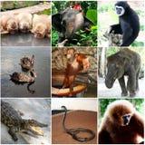 Djurcollage med nio foto Thailand Arkivbild