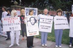Djurens rättigheterdemonstranter som rymmer tecken, Royaltyfri Bild