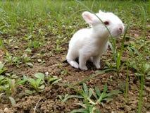 Djuret - behandla som ett barn kanin Royaltyfri Bild