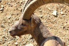 Djuret i djurliv parkerar i dålig mergentheim arkivfoton