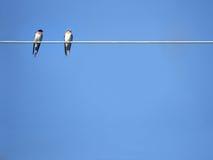 djurfåglar Royaltyfria Foton