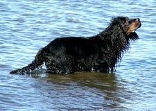 djurhund royaltyfri foto