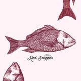 Djurillustration för röda Snapper fotografering för bildbyråer