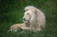 djurkonung Royaltyfri Bild