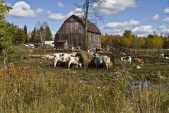 djurlantgård Arkivfoto