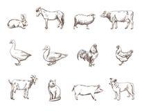djurlantgårdliggande sommar för många sheeeps vektor illustrationer