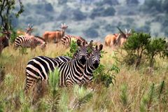 djurliv Royaltyfri Foto
