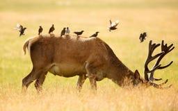 djurliv Arkivbilder