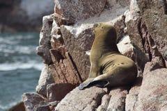 djurliv Fotografering för Bildbyråer