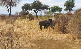 djurliv Arkivfoto