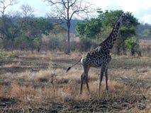 djurliv Royaltyfria Bilder