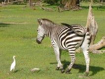djurliv royaltyfria foton