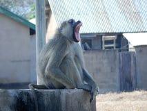 djurliv Arkivfoton