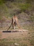 djurliv Royaltyfri Fotografi