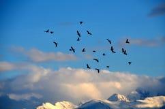 Djurliv av fåglar Royaltyfri Foto