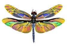 Djurliv för natur för slända för vektorfärgkonst stock illustrationer