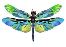 Djurliv för natur för slända för vektorfärgkonst vektor illustrationer