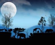 Djurliv från Afrika Arkivfoton