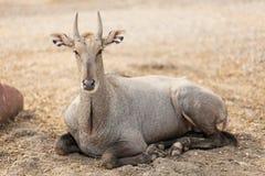 Djurlivdjur i natur Royaltyfria Foton