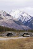 Djurlivplanskild korsning längs huvudvägen för trans. Kanada Arkivfoto