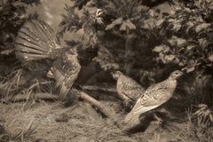 Djurlivplats - djurlivplats Arkivfoto