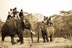 Djurlivsafari, elefantritt Arkivbild