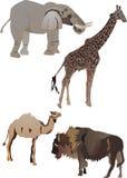 djursamling Arkivbilder