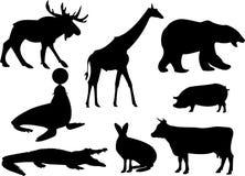 djursilhouettes Arkivfoto
