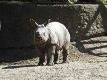 Djurt anseende för ung noshörningnoshörning och se på Sunny Day arkivbilder