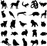 djurt favorit- humanhusdjur Royaltyfri Fotografi