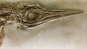 Djurt fossil Fotografering för Bildbyråer