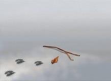 Djurt fotspår med ris och leafen på sanden med Arkivbilder