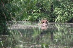 Djurt hus på vattnet Arkivfoto